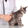 Ветеринарные клиники в Туране